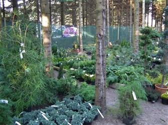 Dette er et lille udpluk af alle vores stedsegrønne planter